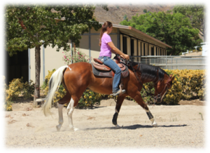 Melissa working training horse Jet in the arena